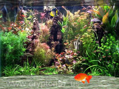 Fantastic 3D Fish Aquarium Screen Saver