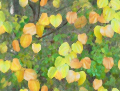 Background dengan motif dedaunan yang sudah mengering dan masih hijau
